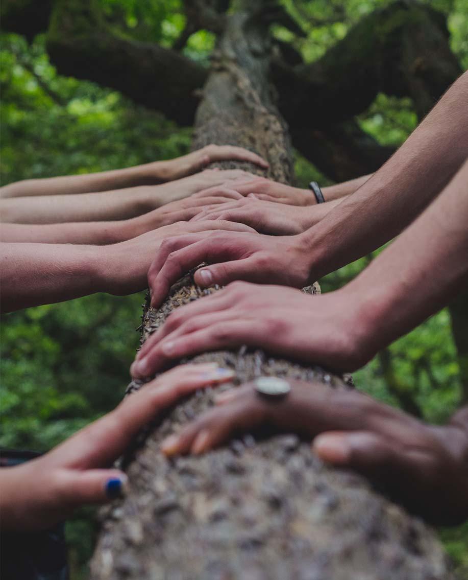 Gruppe an Menschen halten einen Baumstamm